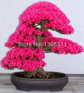 bonsai aliexpress